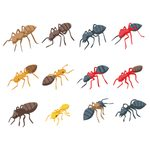 How to Identify Types of Ants