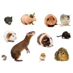 12 Interesting Facts About Rodents