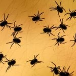 19 Interesting Facts About Spiders