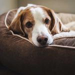9 Best Heated Dog Beds for Winter