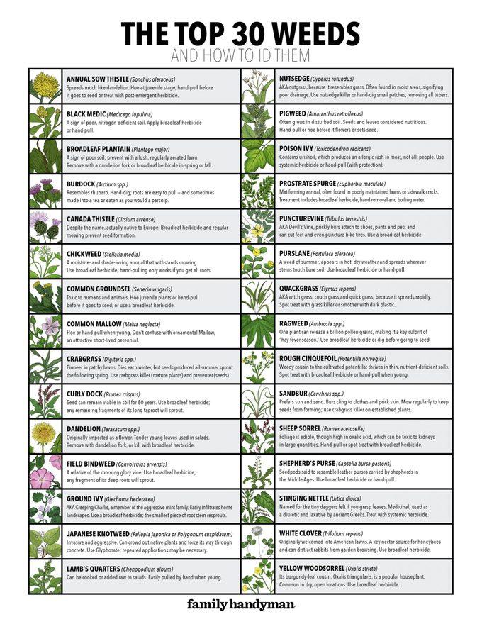 30 weeds Chart