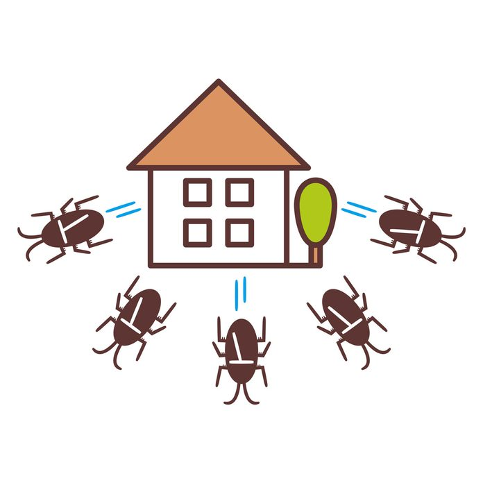 Illustration of cockroaches running away from a house