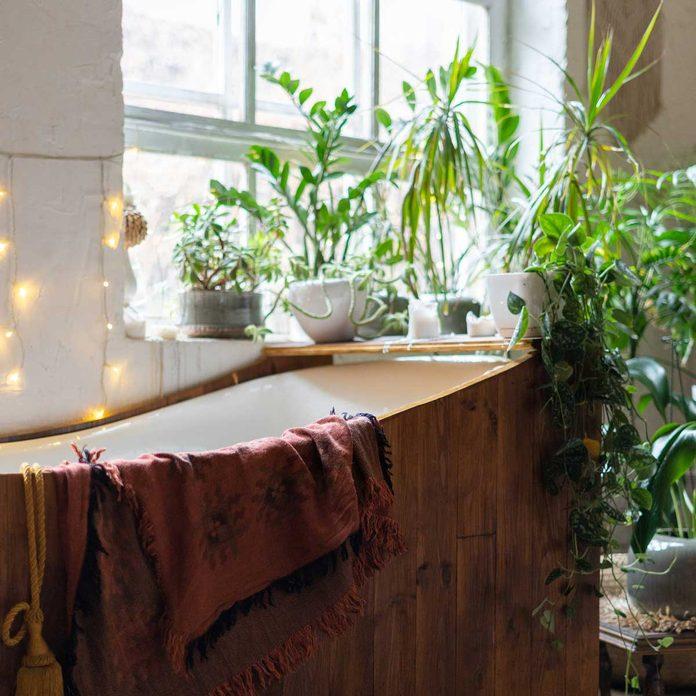 Bathroom Plants Gettyimages 1189414301