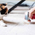 10 Carpet Cleaning Tips for Pet Owners