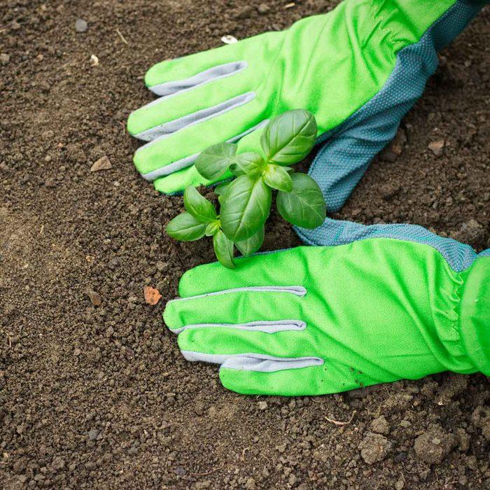 When To Start A Garden Gettyimages 988734750