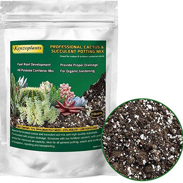 succulent potting soil