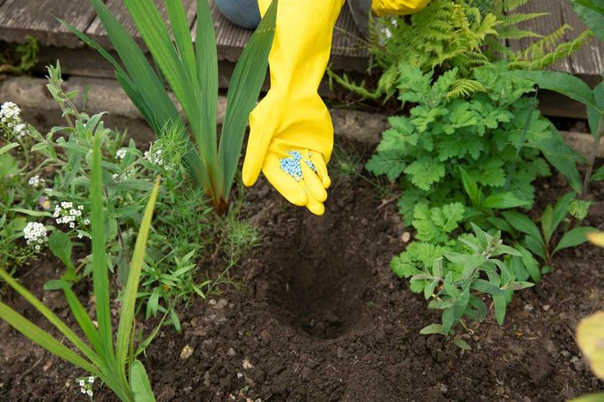 Bulb Fertilizer
