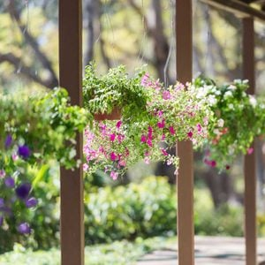 8 Best Outdoor Hanging Plants for Your Patio