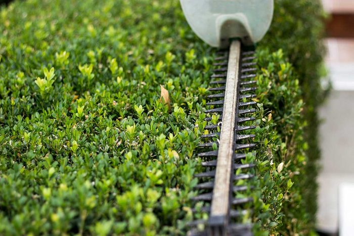 Hedge Trimmer Gettyimages 1198803252