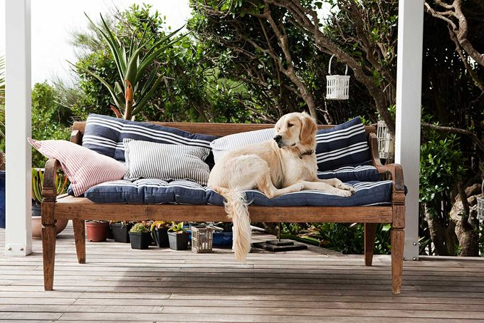 Dog on Outdoor Cushion with Pet Stain