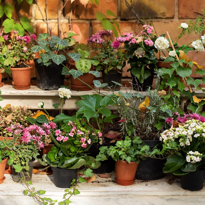 plants on patio outdoors