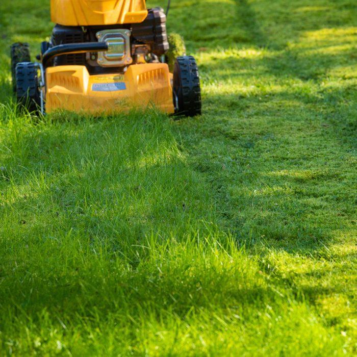 Lawn mower on grass in garden