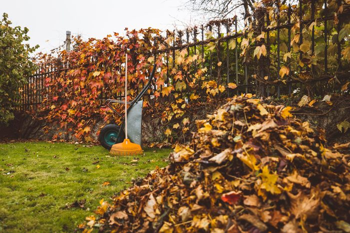 A pile of golden autumn leaves in front and a wheelbarrow with rake leaning on it in the background