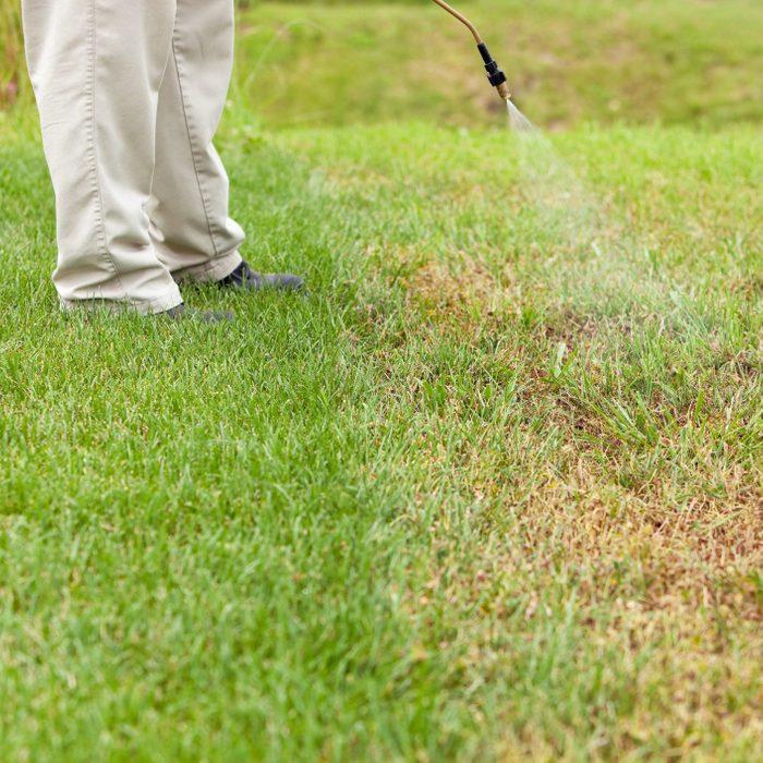 Lawn Care Worker Sprays Crabgrass