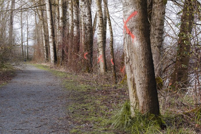 red X marks painted on trees in the forest
