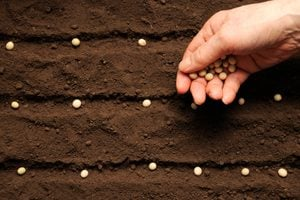 How To Save Seeds from the Garden